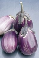 Italian Pink Bicolor (Eggplant/O/P)