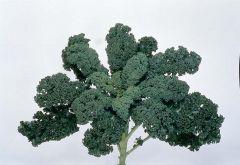 Blue Ridge (Kale)