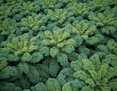 Darkibor (Kale)