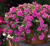 Cora® Cascade™ Lilac (Vinca)