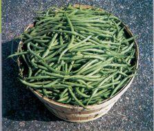 Strike (Green Beans Bush)