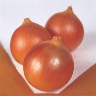 Norstar (Onion/early)