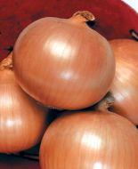 Mountaineer (Onion/main season)