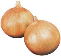 Highlander (Onion/early)