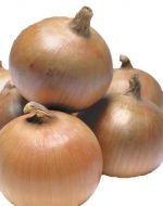 Trailblazer (Onion/Second early)