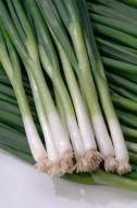 Hardy White Bunching (Onion/bunching)