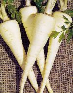 Hamburg Half Long (Parsnip/Rooted Parsley Type)