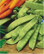 Oregon Giant (Snow Pea)