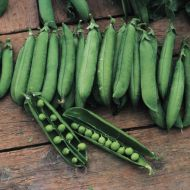Utrillo (Garden peas/late season)