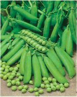Knight (Garden peas/early)