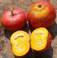 Rouge Vif D'Etempes (O/P Pumpkin)