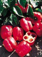 Redstart (Hybrid Sweet Pepper)