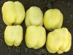 Sandpiper (Hybrid Colored Pepper)