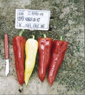 Super Hungarian Hot (Hybrid Hot Pepper)