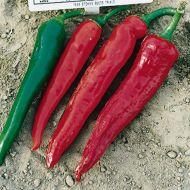 Hot Portugal (Hot Pepper)