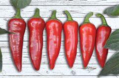 SV5232HY (Hybrid Pepper/hot)