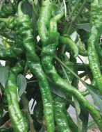El Senor (Hybrid Pepper/hot)