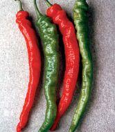 Mesilla (Hybrid Hot Pepper)