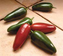 El Jefe (Hybrid Hot Pepper)