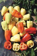 Jumbo Stuff (Hybrid Colored Pepper)