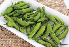 Takara (Hybrid Pepper/hot)