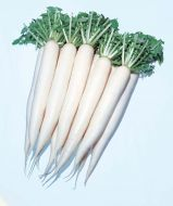 April Cross (Daikon Radish/hybrid)