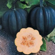 Autumn Delight (Hybrid Squash)
