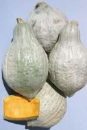 Heavenly Hubbard (Hubbard Squash)