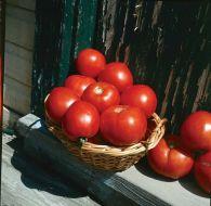 Basket Vee (Bush Tomato)