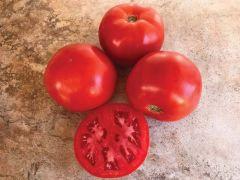 STM2255 VF/Aal (Hybrid Bush Tomato)