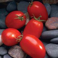 Mariana (Plum Tomato Pellets)