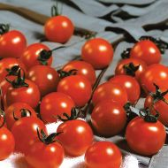 Sweet Million TMV FN (Hybrid Cherry Tomato)