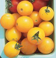 Sweet Gold TMV F (Hybrid Cherry Tomato)