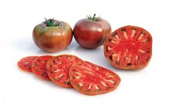 Cherokee Purple (Novelty/Heritage Tomato)