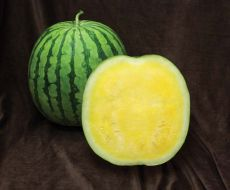 Yellow Buttercup (Watermelon/triploid)
