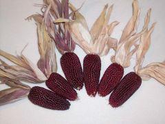 Cherry Berry (Popcorn/ornamental)