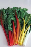 Celebration (Swiss Chard)