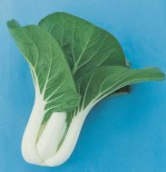 White Tropical Choi