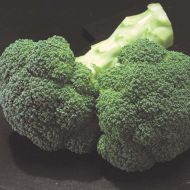 Gypsy (SBC8411) (Broccoli)