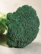 Emerald Crown (Broccoli)
