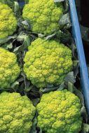 Vitaverde (Cauliflower/green)