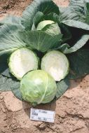 Bourbon (Cabbage/early)