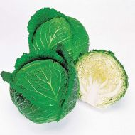 Savoy Ace Improved (Cabbage/savoy)
