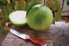 Decurion (Cabbage/storage)