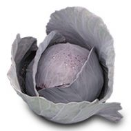 Rondale (Cabbage/red)