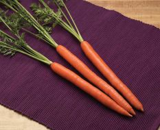 Triton (Carrot/hybrid/early)