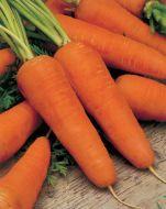 Royal Chantenay (Carrot/processing)