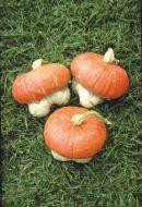 Mini Red Turban (Small Gourd)