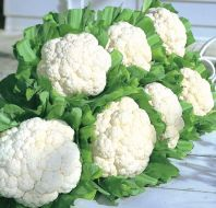 Snow Crown (Cauliflower/early)