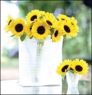 Sunrich Lemon Summer (Helianthus)